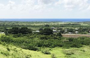 View from Canvas and Cave Plantation